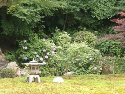 庭園・紫陽花