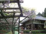 正法寺 本堂と藤棚